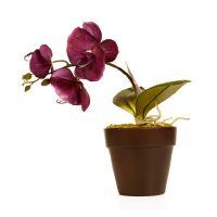 Цветы от Максимовой, тепличное хозяйсто