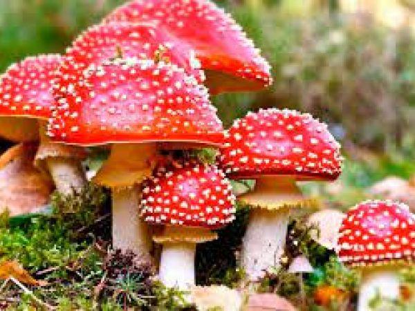 Обережно, отруйні гриби!