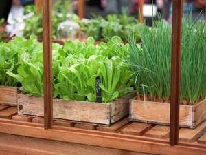 Экономный подоконник, или Что можно выращивать дома зимой