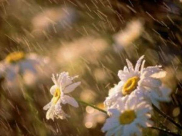 Погода у Кропивницькому 1 червня