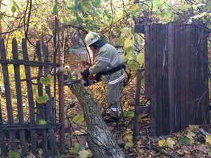 У Кіровоградській області рятувальники двічі розпилювали аварійні дерева