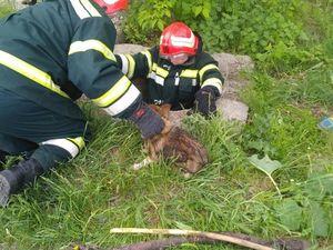 Кіровоградська область: Рятувальники дістали собаку з покинутого каналізаційного колодязя