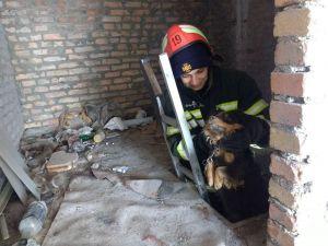 У Новоукраїнці з підвального приміщення врятували собаку