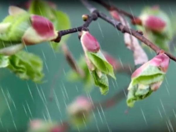 Погода у Кропивницькому 14 квітня, у неділю