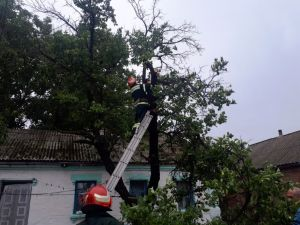 Кіровоградської область: Рятувальники двічі прибирали аварійні дерева