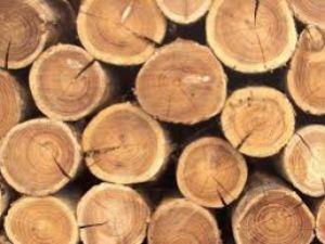 На Кіровоградщині чоловік незаконно напиляв дерев на  140 тисяч