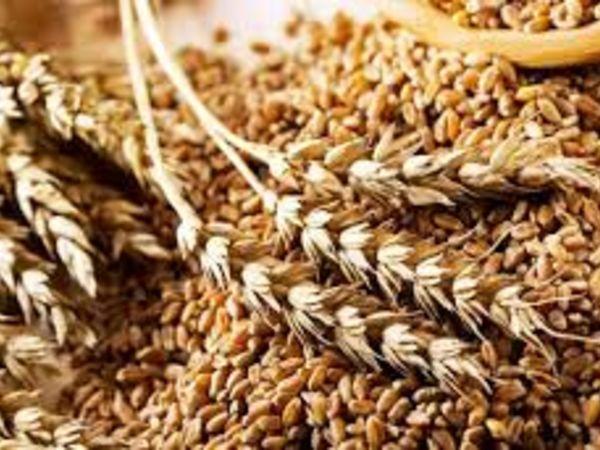 Мінагрополітики: Презентували новий стандарт на пшеницю