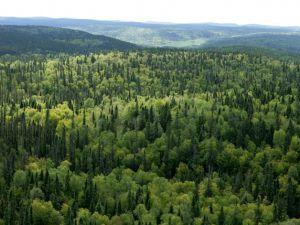 Україна має терміново стати на шлях екологічного лісокористування