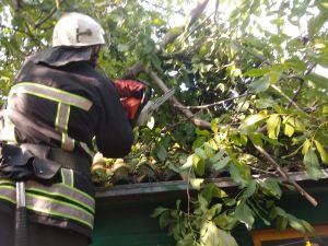 Кіровоградська область: Рятувальники чотири рази прибирали аварійні дерева