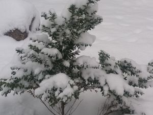 Погода у Кропивницькому 17 січня