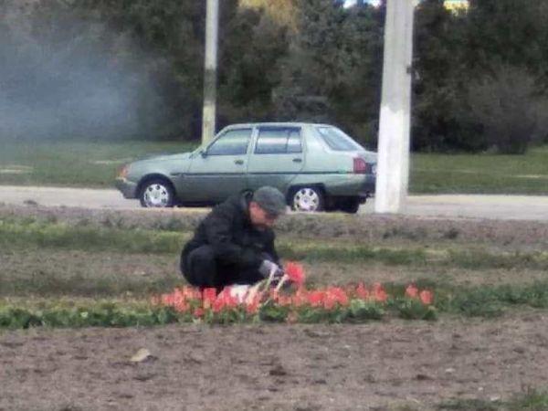 У Кропивницькому біля аеропорту застукали любителя «нічийних» тюльпанів (ФОТО)