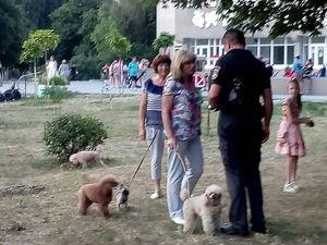 Відтепер в Олександрії власники собак прибиратимуть за своими улюбленцями