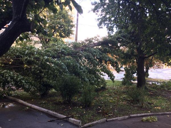 Сьогодні шквальний вітер зірвав дах на балашівському ринку та  повалив дерева (ФОТО)