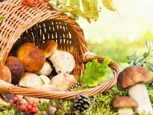 Кіровоградщина: Мешканка Суботців померла від отруєння грибами