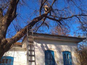 На Новомиргородщині пожежники врятували музей «Тобілевичі» від аварійної гілки