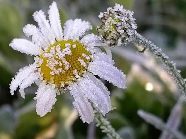 УВАГА! На Кіровоградщині очікуються заморзки на поверхні ґрунту!