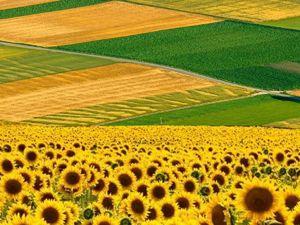 Кіровоградщина: З початку року прокуратура повернула державі 268 га земель вартістю 44 мільйони