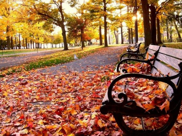 Погода у Кропивницькому 17 листопада