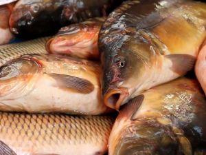 Експорт української риби до Європи та Сходу збільшився