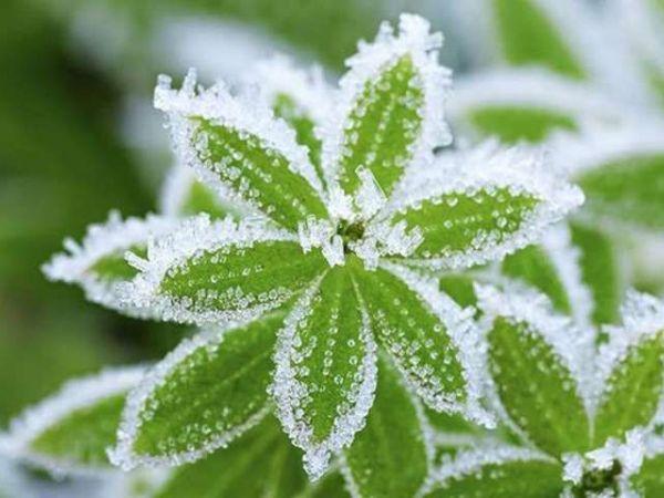 Увага! Попередження про заморозки на Кіровоградщині
