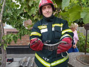 Кіровоградщина: У Новоукраїнці вуж потрапив до колодязя