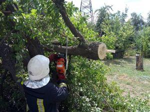 На Кіровоградщині рятувальники прибирають аварійні дерева