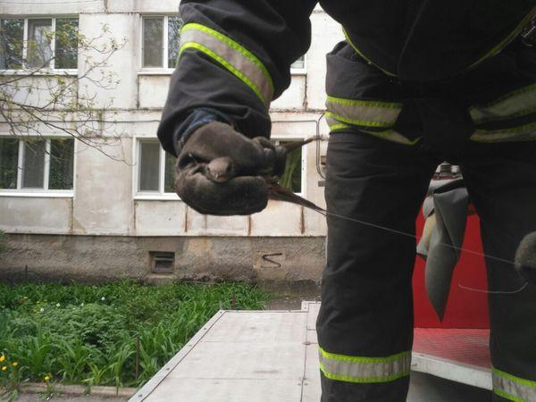 Кропивницький: Ластівка заплуталася у дроті під дахом п'ятиповерхівки