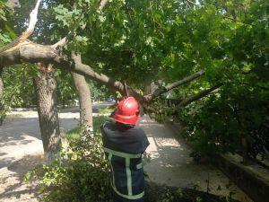 Кіровоградська область: Рятувальники спиляли аварійні дерева