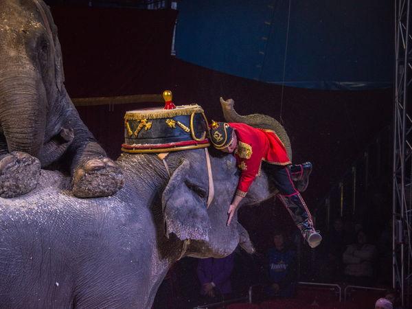 У кропивницькому цирк «Кобзов» подарує справжній Новий рік дитячому будинку
