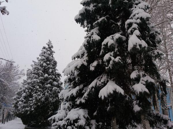 Погода у Кропивницькому у понеділок, 11 січня