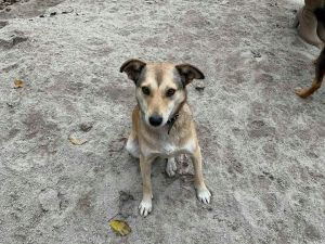 Кропивницькі активістки передали речі та матеріальну допомогу безпритульним тваринам у «БІМ»