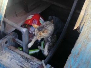 Кіровоградщина: Котик потрапив до криниці (ФОТО)