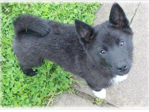 Помогите разыскать  щенка, который потерялся в районе Клинцов