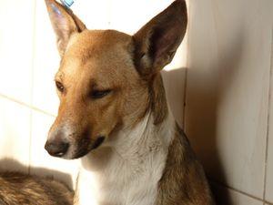 В александрийском приюте среди собак  вспыхнула эпидемия. Нужна помощь