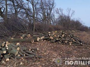 На Кіровоградщині поліцейські викрили «чорних лісорубів» (ФОТО)