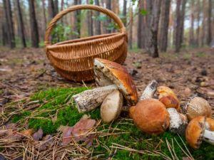 На Голованівщині у лісі знепритомнів 90-річний дідусь