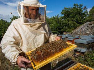 Мешканці Кіровоградщини можуть безкоштовно навчитися бджільництву