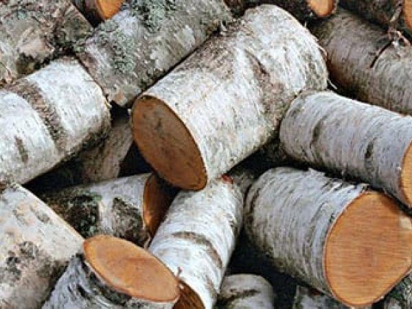 """Кіровоградщина: """"Чорні"""" лісорубили чинили опір поліції при затриманні"""