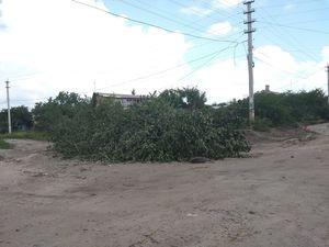 Кропивничани вийшли на захист своїх домівок та дерев (ФОТО)