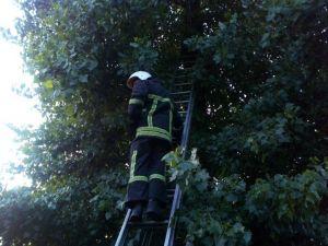 У Кропивницькому рятувальники зняли з дерева кота (ФОТО)