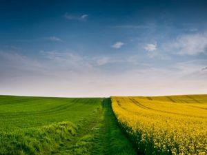 Чотирьом ОТГ на Кіровоградщині передали майже 11,3 тисячі га земель