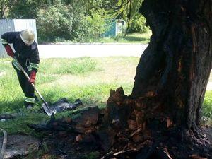 На Кіровоградщині загорілося велике старе дерево