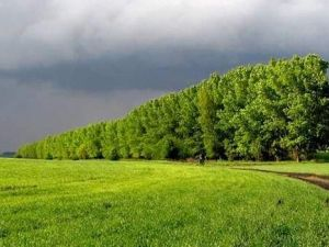 Кіровоградщина: Відтепер лісосмуги захищатимуться по новим правилам