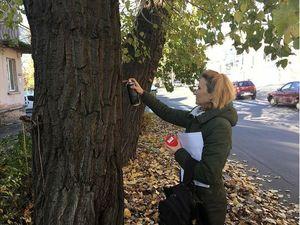 Кропивницький: На каналі Інтер вийшов сюжет про ймовірну вирубку дерев на Київській (ВІДЕО)