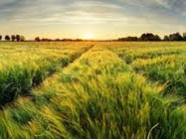 На Кіровоградщині фермерське господарство повернуло громаді земельну ділянку