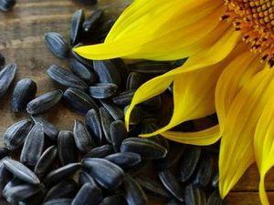 У Кропивницькому продається завод з виробництва соняшникової олії