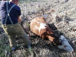 Кіровоградщина: У Сухому Ташлику годувальниця потрапила у трясовину