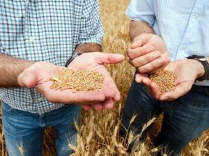 На Кіровоградщині потрібні агрономи