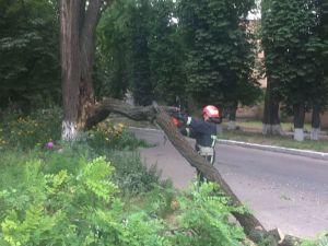 Кропивницький: На Шатила аварійна гілка впала на дорогу
