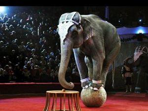 Україна гуманна. Навіщо відмовлятись від використання тварин в цирках?